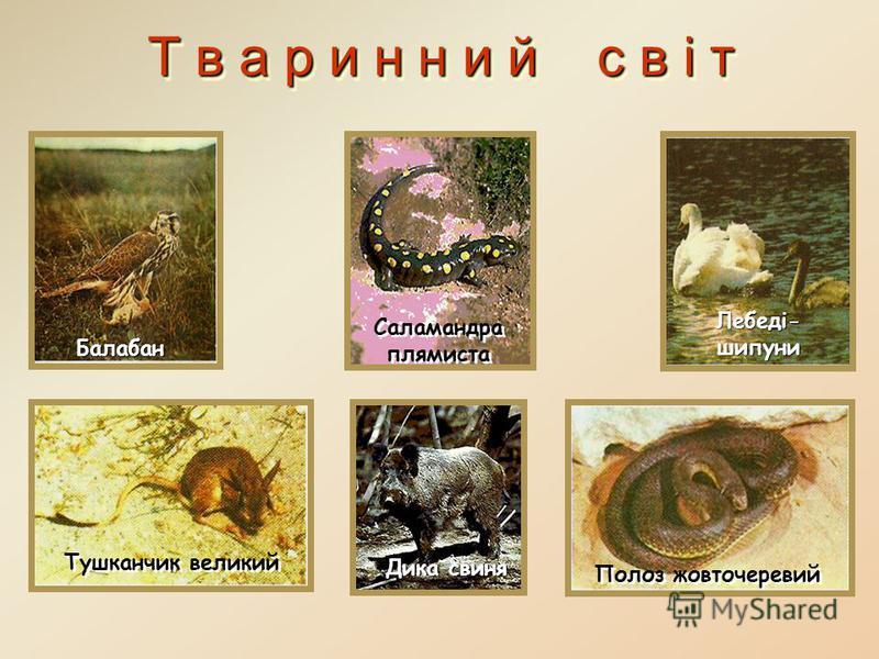 Т в а р и н н и й с в і т Лисиця звичайна Благородний олень Жаба Кримський олень Благородний олень Ящірка
