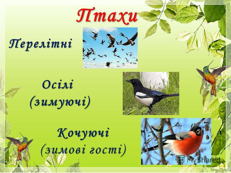 Птахи Перелітні Осілі Осілі(зимуючі) Кочуючі Кочуючі (зимові гості)