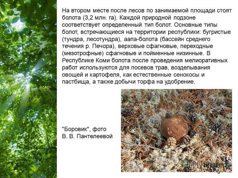 Free Powerpoint Templates Page 12 На втором месте после лесов по занимаемой площади стоят болота (3,2 млн. га). Каждой природной подзоне соответствует определенный тип болот. Основные типы болот, встречающиеся на территории республики: бугристые (тун