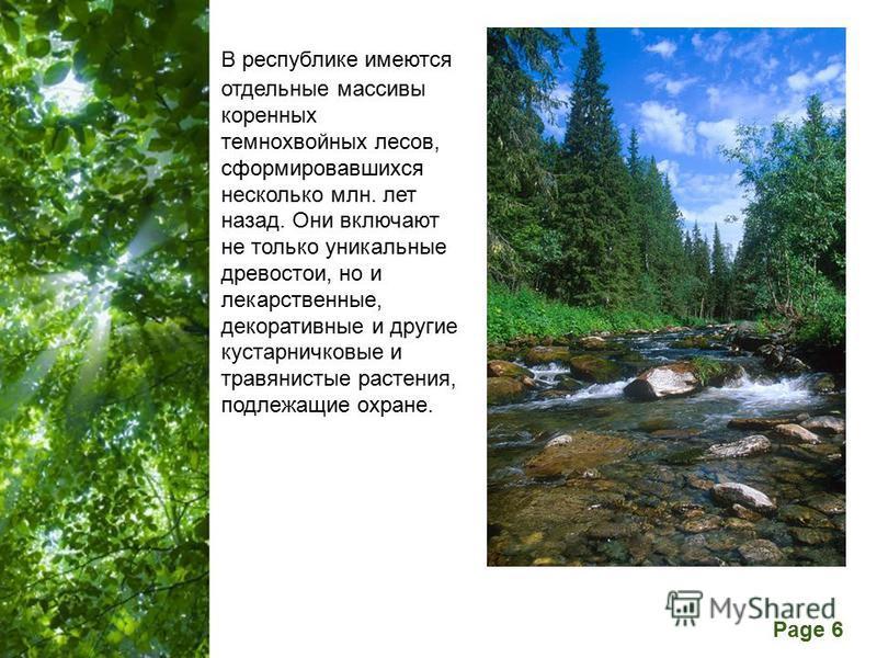 Free Powerpoint Templates Page 6 В республике имеются отдельные массивы коренных темнохвойных лесов, сформировавшихся несколько млн. лет назад. Они включают не только уникальные древостои, но и лекарственные, декоративные и другие кустарничковые и тр