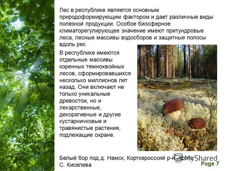 Free Powerpoint Templates Page 7 В республике имеются отдельные массивы коренных темнохвойных лесов, сформировавшихся несколько миллионов лет назад. Они включают не только уникальные древостои, но и лекарственные, декоративные и другие кустарничковые