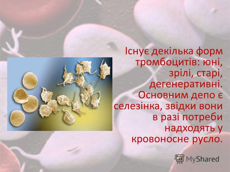 Існує декілька форм тромбоцитів: юні, зрілі, старі, дегенеративні. Основним депо є селезінка, звідки вони в разі потреби надходять у кровоносне русло.