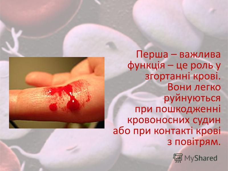 Перша – важлива функція – це роль у згортанні крові. Вони легко руйнуються при пошкодженні кровоносних судин або при контакті крові з повітрям.