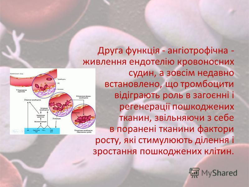 Друга функція - ангіотрофічна - живлення ендотелію кровоносних судин, а зовсім недавно встановлено, що тромбоцити відіграють роль в загоєнні і регенерації пошкоджених тканин, звільняючи з себе в поранені тканини фактори росту, які стимулюють ділення