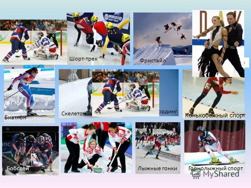 Шорт-трек Сноубординг Фристайл Скелетон Биатло́н Бобслей Фигурное катание Лыжные гонки Горнолыжный спорт Хоккей с шайбой Конькобежный спорт