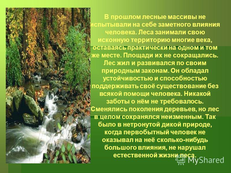 В прошлом лесные массивы не испытывали на себе заметного влияния человека. Леса занимали свою исконную территорию многие века, оставаясь практически на одном и том же месте. Площади их не сокращались. Лес жил и развивался по своим природным законам.
