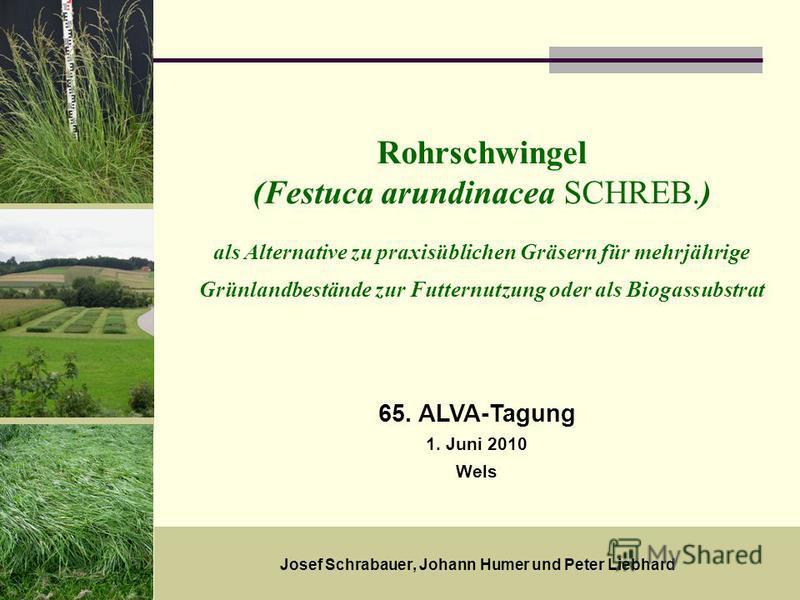 18. Mai 20091 Rohrschwingel (Festuca arundinacea SCHREB.) als Alternative zu praxisüblichen Gräsern für mehrjährige Grünlandbestände zur Futternutzung oder als Biogassubstrat Josef Schrabauer, Johann Humer und Peter Liebhard 65. ALVA-Tagung 1. Juni 2