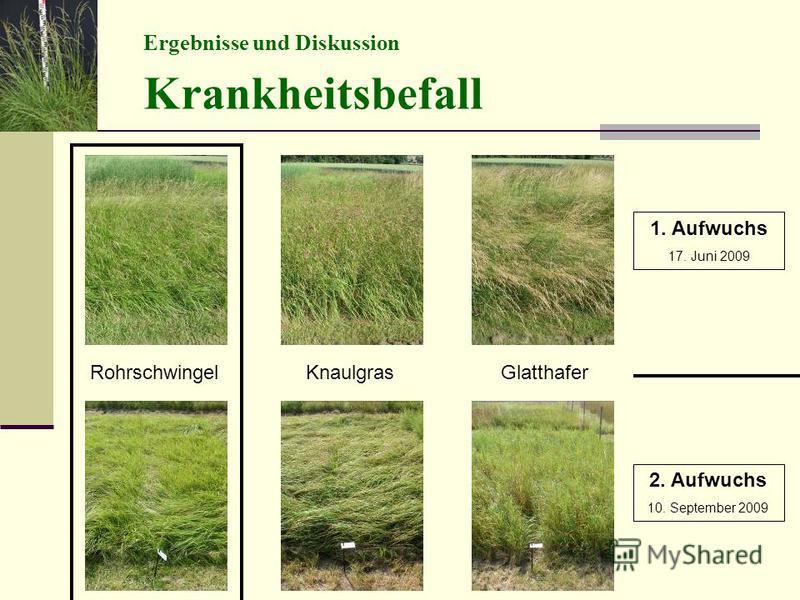 Ergebnisse und Diskussion Krankheitsbefall RohrschwingelKnaulgrasGlatthafer 1. Aufwuchs 17. Juni 2009 2. Aufwuchs 10. September 2009