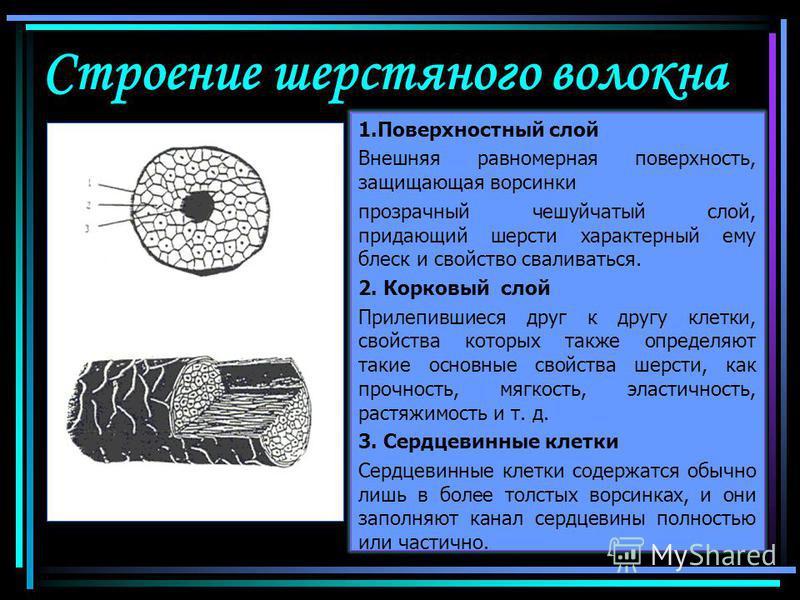 Строение шерстяного волокна 1. Поверхностный слой Внешняя равномерная поверхность, защищающая ворсинки прозрачный чешуйчатый слой, придающий шерсти характерный ему блеск и свойство сваливаться. 2. Корковый слой Прилепившиеся друг к другу клетки, свой