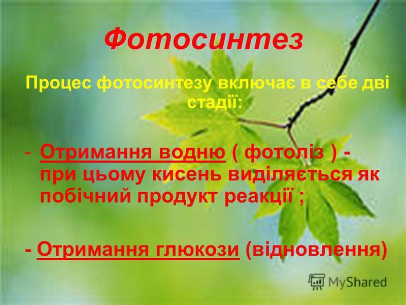 Фотосинтез Процес фотосинтезу включає в себе дві стадії: -Отримання водню ( фотоліз ) - при цьому кисень виділяється як побічний продукт реакції ; - Отримання глюкози (відновлення)