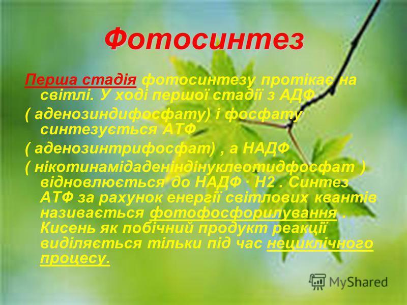 Фотосинтез Перша стадія фотосинтезу протікає на світлі. У ході першої стадії з АДФ ( аденозиндифосфату) і фосфату синтезується АТФ ( аденозинтрифосфат), а НАДФ ( нікотинамідаденіндінуклеотидфосфат ) відновлюється до НАДФ H2. Синтез АТФ за рахунок ене