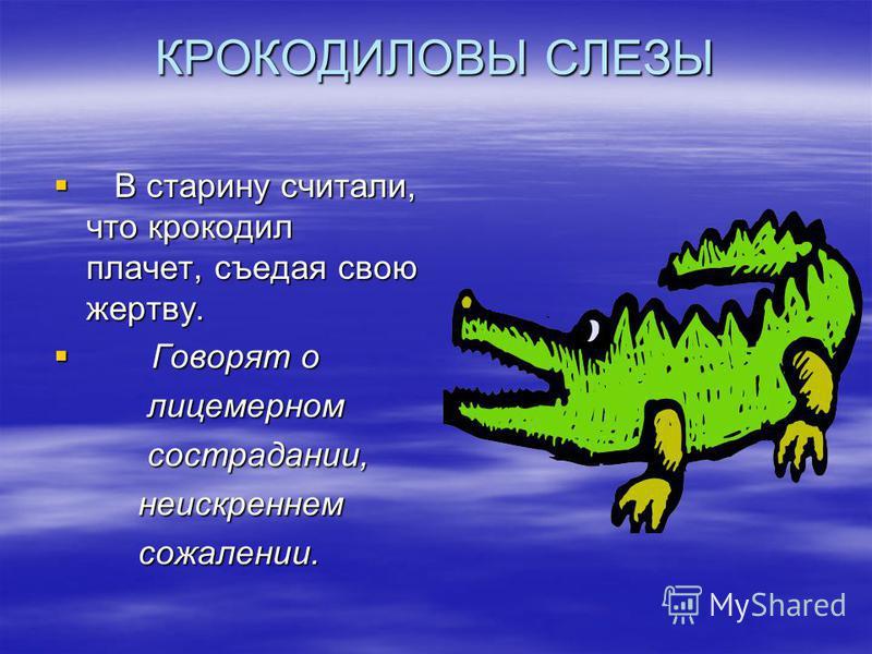КРОКОДИЛОВЫ СЛЕЗЫ В старину считали, что крокодил плачет, съедая свою жертву. В старину считали, что крокодил плачет, съедая свою жертву. Говорят о Говорят о лицемерном лицемерном сострадании, сострадании, неискреннем неискреннем сожалении. сожалении