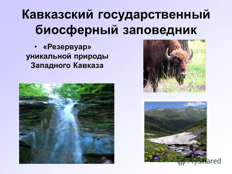 Кавказский государственный биосферный заповедник «Резервуар» уникальной природы Западного Кавказа