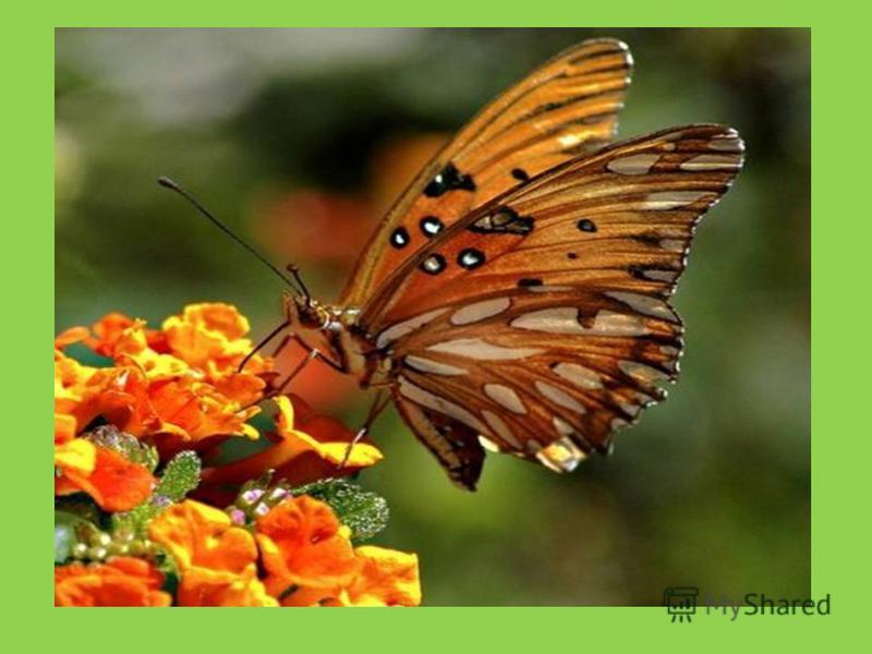 Первые пчелы и бабочки летят на цветы.