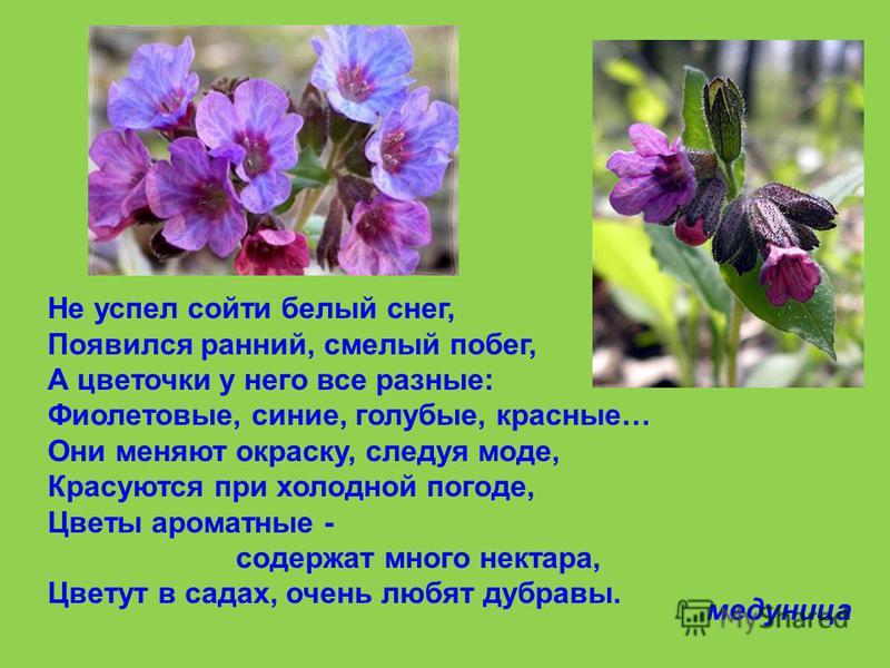 Спит в землице круглый год, Лишь к весне она встаёт: На невысоком стебелёчке, В кружевном листочке, Соцветие – сиреневые цветочки, Отцветают быстро, виднеются стручочки, А под землёй клубенёк, Жёлтый, сочный огонёк. хохлатка