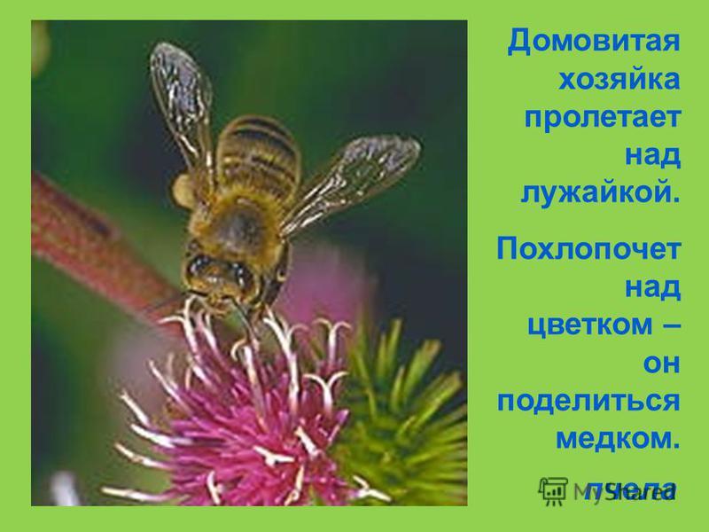 На большой цветной ковер Села эскадрилья, То раскроет, то закроет Расписные крылья. бабочки