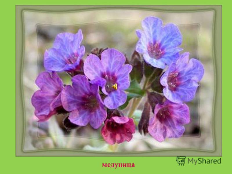 А вокруг нее,будто синие брызги, рассыпала первые цветы подснежника