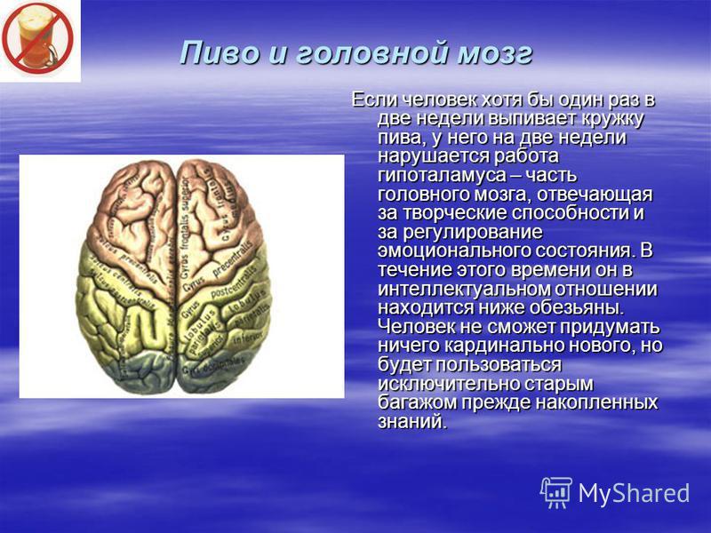 Пиво и головной мозг Если человек хотя бы один раз в две недели выпивает кружку пива, у него на две недели нарушается работа гипоталамуса – часть головного мозга, отвечающая за творческие способности и за регулирование эмоционального состояния. В теч