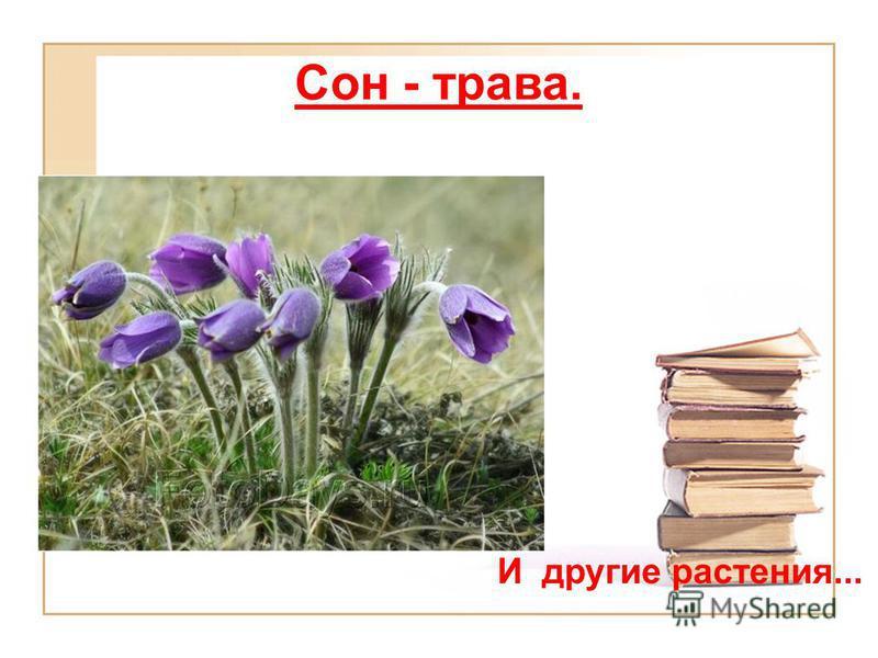 Сон - трава. И другие растения...