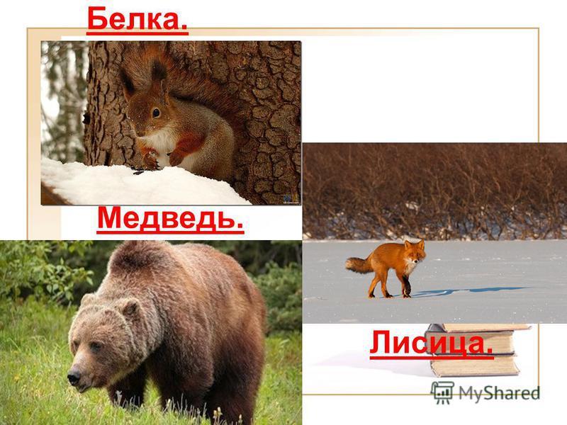 Медведь. Лисица. Белка.