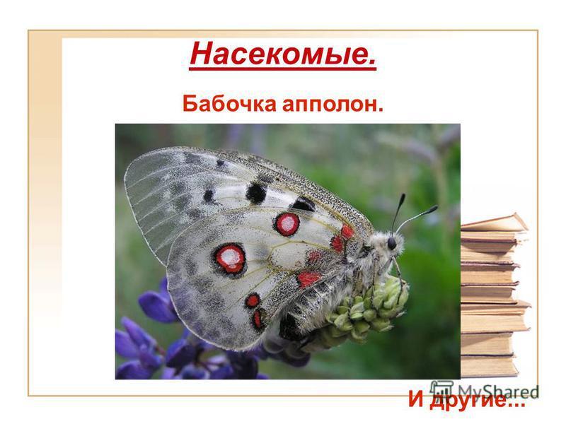 Насекомые. Бабочка аполлон. И другие...