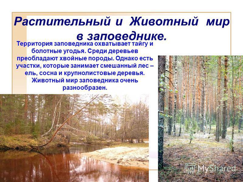 Растительный и Животный мир в заповеднике. Территория заповедника охватывает тайгу и болотные угодья. Среди деревьев преобладают хвойные породы. Однако есть участки, которые занимает смешанный лес – ель, сосна и крупнолистовые деревья. Животный мир з