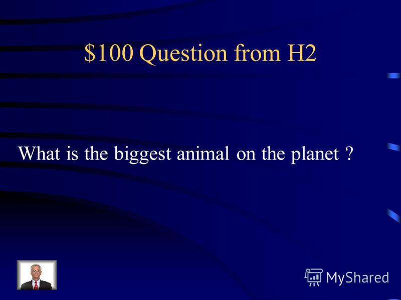 $500 Answer from H1 Architect Sir Christopher Wren