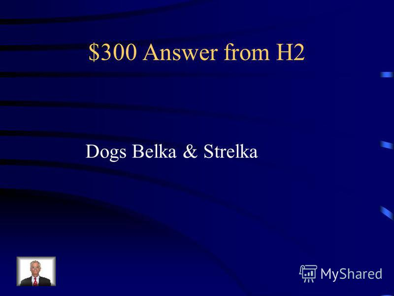 $300 Question from H2 Which animals were in the space ?