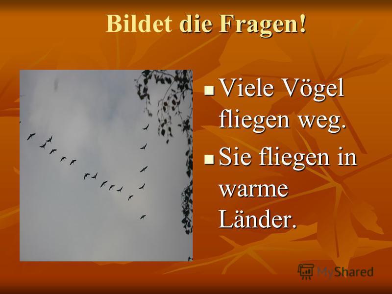 Viele Vögel fliegen weg. Viele Vögel fliegen weg. Sie fliegen in warme Länder. Sie fliegen in warme Länder. die Fragen! Bildet die Fragen!