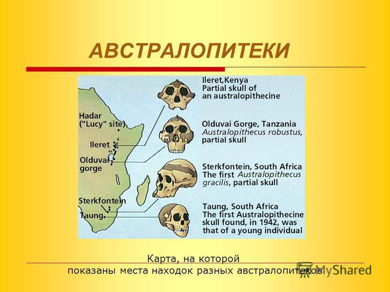 ЭТАПЫ эволюции семейства гоминид 1. ПРЕДШЕСТВЕННИКИ ЧЕЛОВЕКА австралопитеки 2. ДРЕВНЕЙШИЕ ЛЮДИ синантропы, питекантропы 3. ДРЕВНИЕ ЛЮДИ неандертальцы 4. СОВРЕМЕННЫЕ ЛЮДИ кроманьонцы