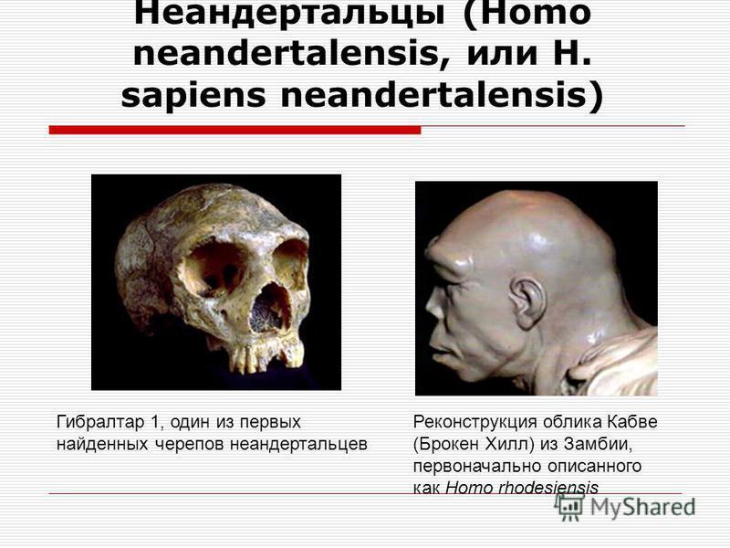 Древнейшие люди Архантропы Жили приблизительно 1,6 млн. лет до 200 тыс. лет назад рост 165-170 см объем мозга около 800- 1400 см 3 постоянное прямохождение формирование речи овладение огнем