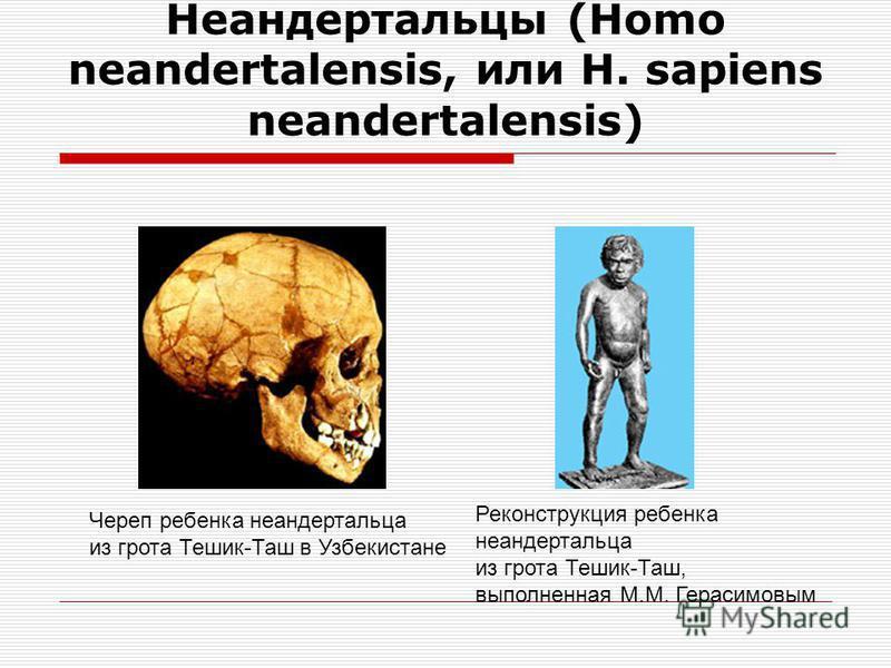 Неандертальцы (Homo neandertalensis, или H. sapiens neandertalensis) Реконструкция облика ребенка Гибралтар 2 Черепная крышка из долины Неандера под Дюссельдорфом (Германия) – первый научно описанный череп неандертальца