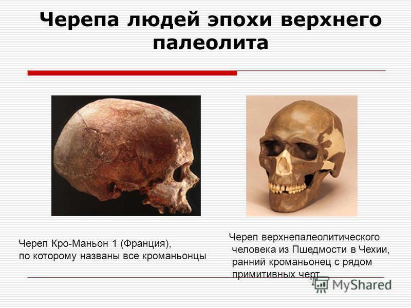 Ископаемые люди современного типа 40 тыс. лет Высокий лоб Нет надглазничного валика Подбородочный выступ Развита речь Кости скелета тонкие Объем мозга 1800 см