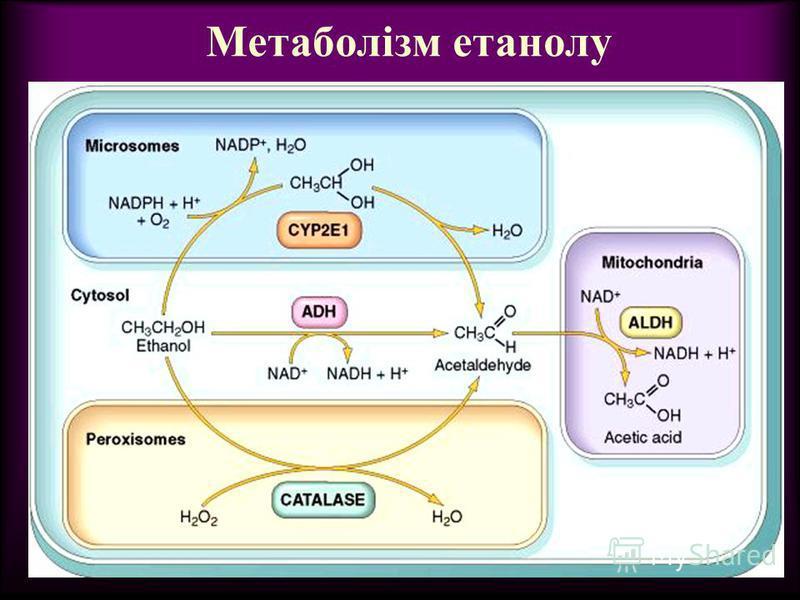Метаболізм етанолу