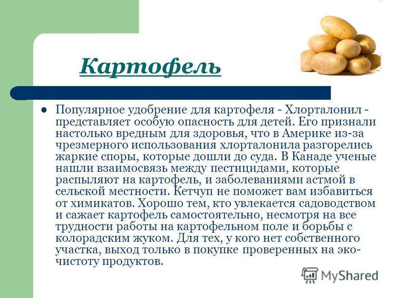 Картофель Популярное удобрение для картофеля - Хлорталонил - представляет особую опасность для детей. Его признали настолько вредным для здоровья, что в Америке из-за чрезмерного использования хлорталонила разгорелись жаркие споры, которые дошли до с