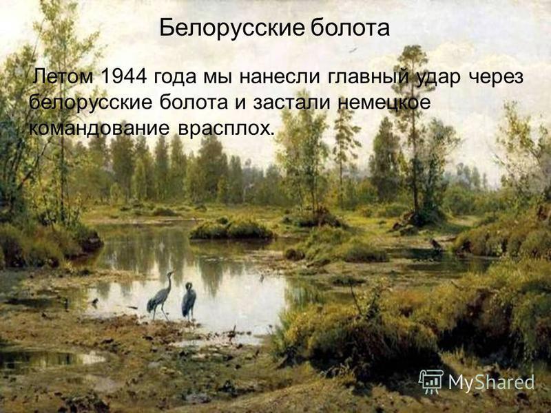 Белорусские болота Летом 1944 года мы нанесли главный удар через белорусские болота и застали немецкое командование врасплох.
