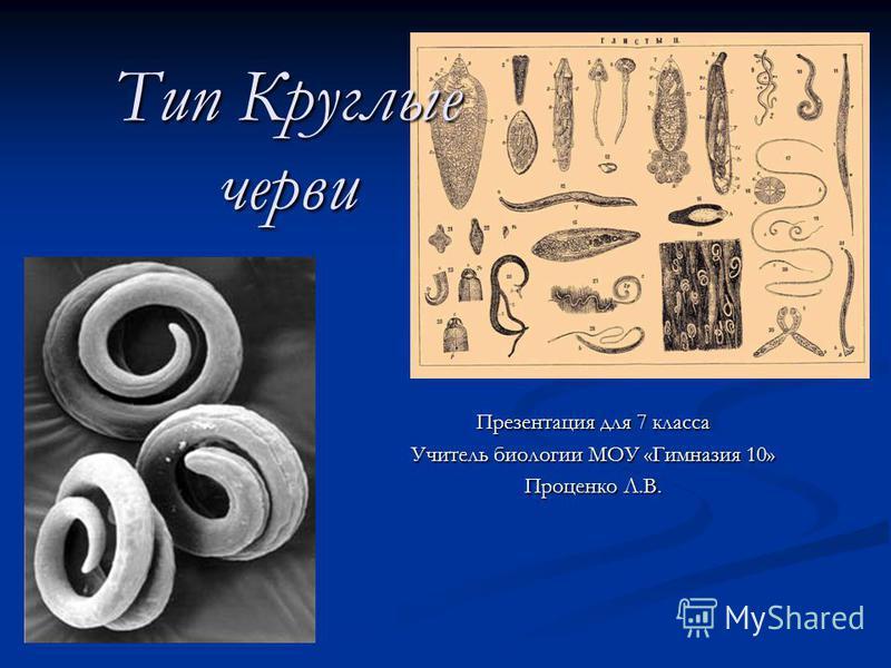 Тип Круглые черви Презентация для 7 класса Учитель биологии МОУ «Гимназия 10» Проценко Л.В.