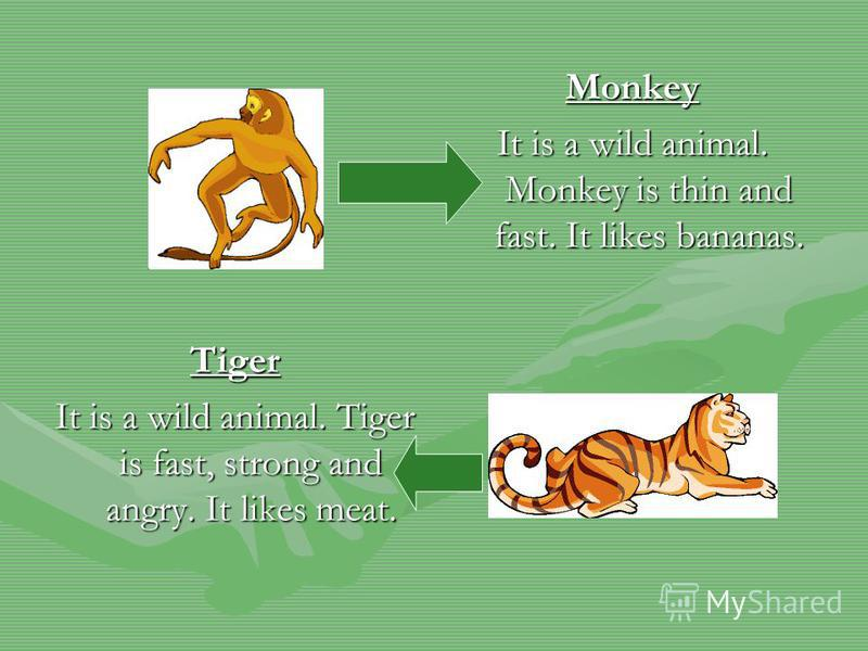 Monkey It is a wild animal. Monkey is thin and fast. It likes bananas. Tiger It is a wild animal. Tiger is fast, strong and angry. It likes meat.