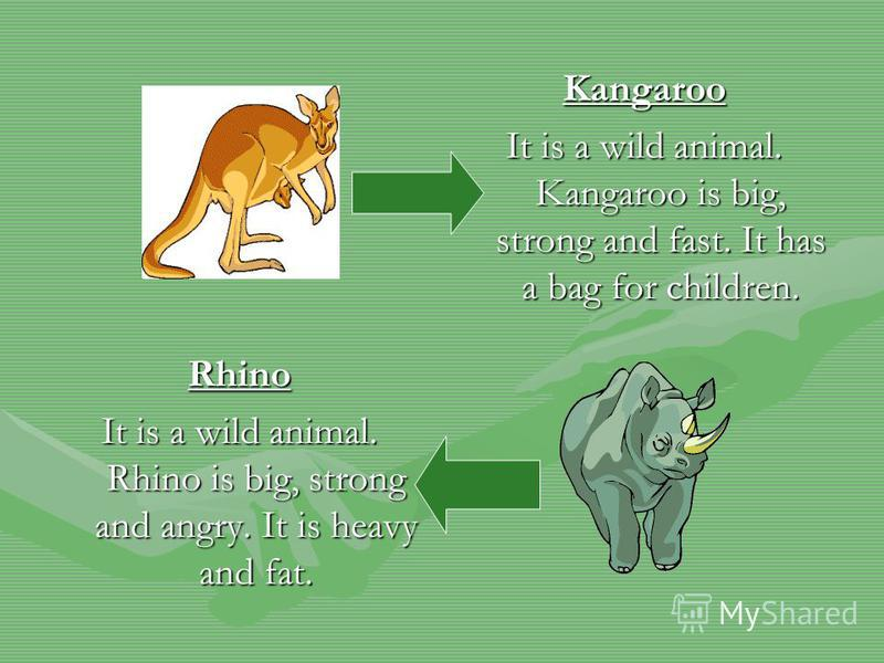 Kangaroo It is a wild animal. Kangaroo is big, strong and fast. It has a bag for children. Rhino It is a wild animal. Rhino is big, strong and angry. It is heavy and fat.