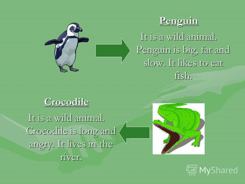 Penguin It is a wild animal. Penguin is big, fat and slow. It likes to eat fish. Crocodile It is a wild animal. Crocodile is long and angry. It lives in the river.