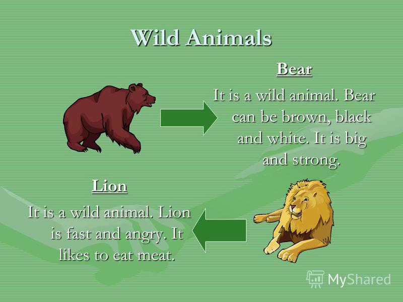 Wild Animals Bear It is a wild animal. Bear can be brown, black and white. It is big and strong. Lion It is a wild animal. Lion is fast and angry. It likes to eat meat.
