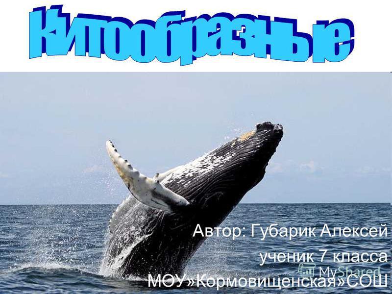 Автор: Губарик Алексей ученик 7 класса МОУ»Кормовищенская»СОШ