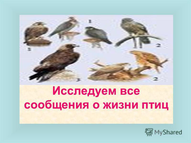 Исследуем все сообщения о жизни птиц
