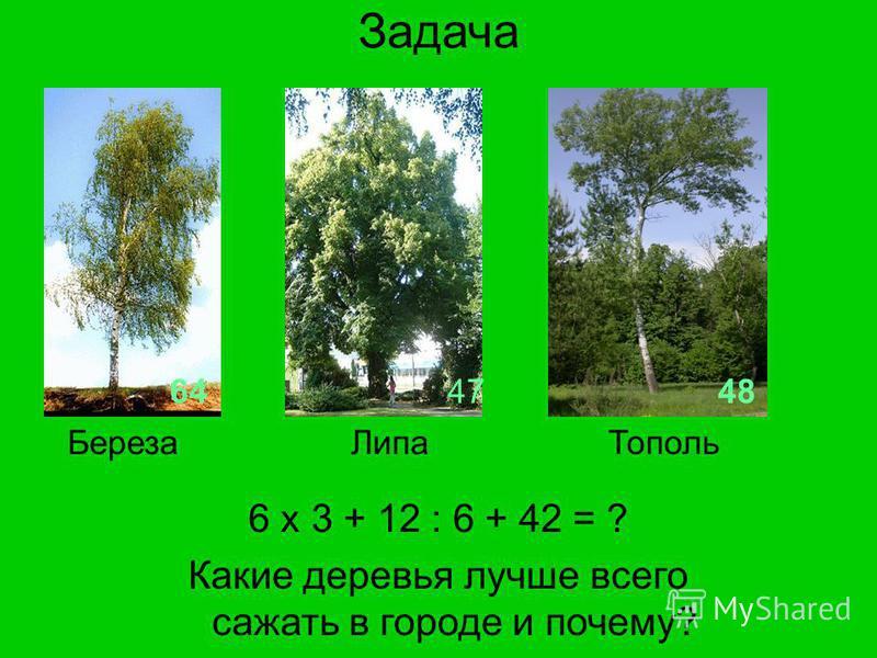 Задача 6 х 3 + 12 : 6 + 42 = ? Какие деревья лучше всего сажать в городе и почему? 644748 Береза ЛипаТополь
