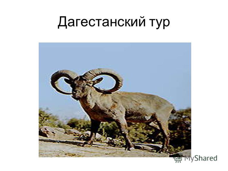 Дагестанский тур