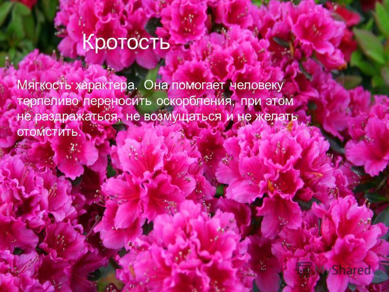 Кротость Мягкость характера. Она помогает человеку терпеливо переносить оскорбления, при этом не раздражаться, не возмущаться и не желать отомстить.
