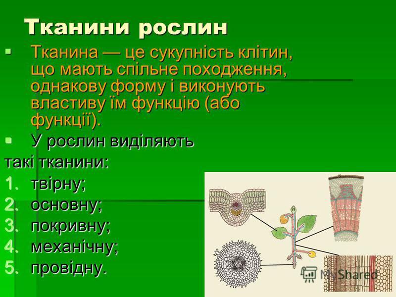 Тканини рослин Тканина це сукупність клітин, що мають спільне походження, однакову форму і виконують властиву їм функцію (або функції). Тканина це сукупність клітин, що мають спільне походження, однакову форму і виконують властиву їм функцію (або фун