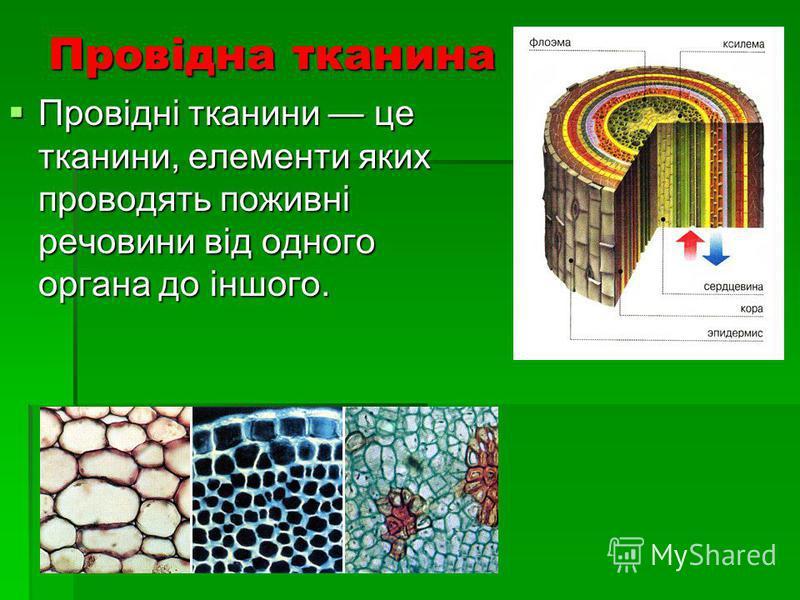Провідна тканина Провідні тканини це тканини, елементи яких проводять поживні речовини від одного органа до іншого. Провідні тканини це тканини, елементи яких проводять поживні речовини від одного органа до іншого.