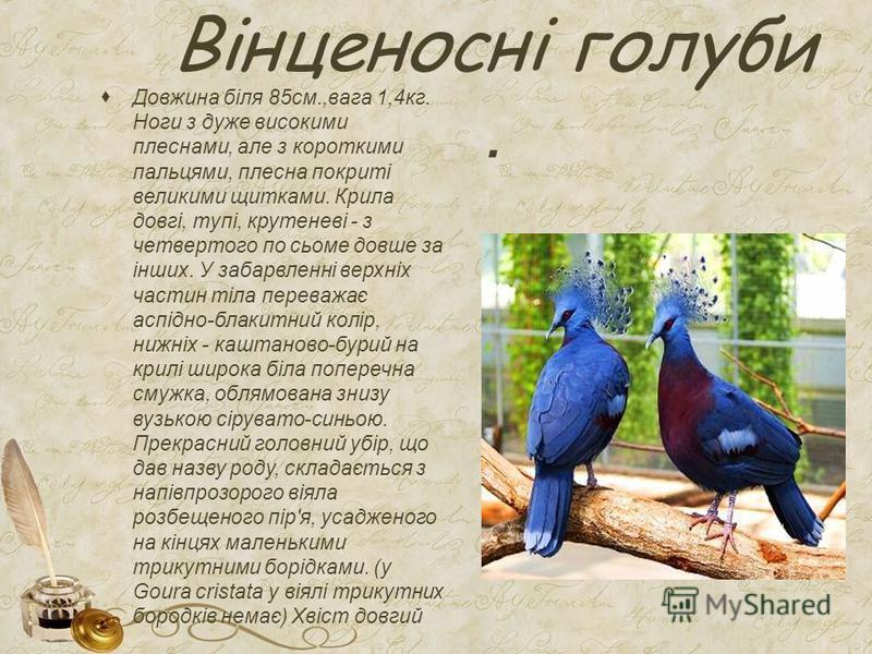 Вінценосні голуби. Довжина біля 85см.,вага 1,4кг. Ноги з дуже високими плеснами, але з короткими пальцями, плесна покриті великими щитками. Крила довгі, тупі, крутеневі - з четвертого по сьоме довше за інших. У забарвленні верхніх частин тіла переваж