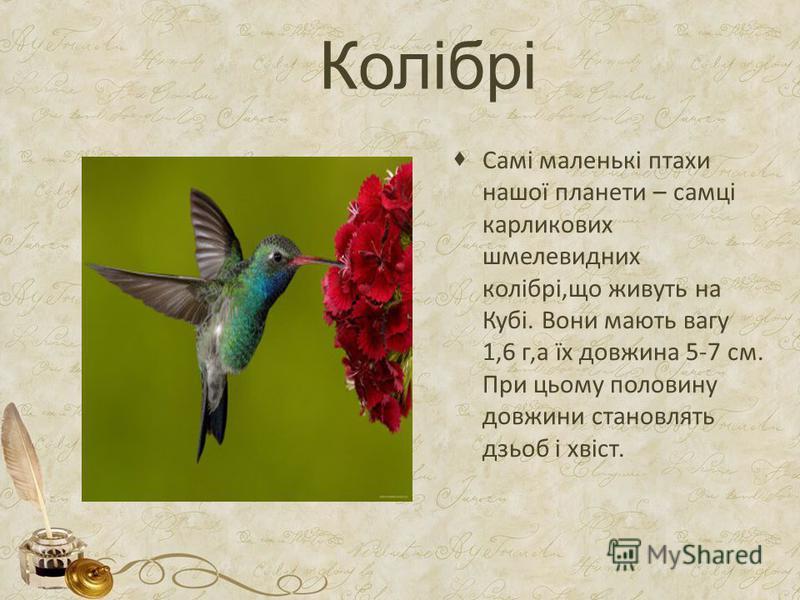 Колібрі Самі маленькі птахи нашої планети – самці карликових шмелевидних колібрі,що живуть на Кубі. Вони мають вагу 1,6 г,а їх довжина 5-7 см. При цьому половину довжини становлять дзьоб і хвіст.